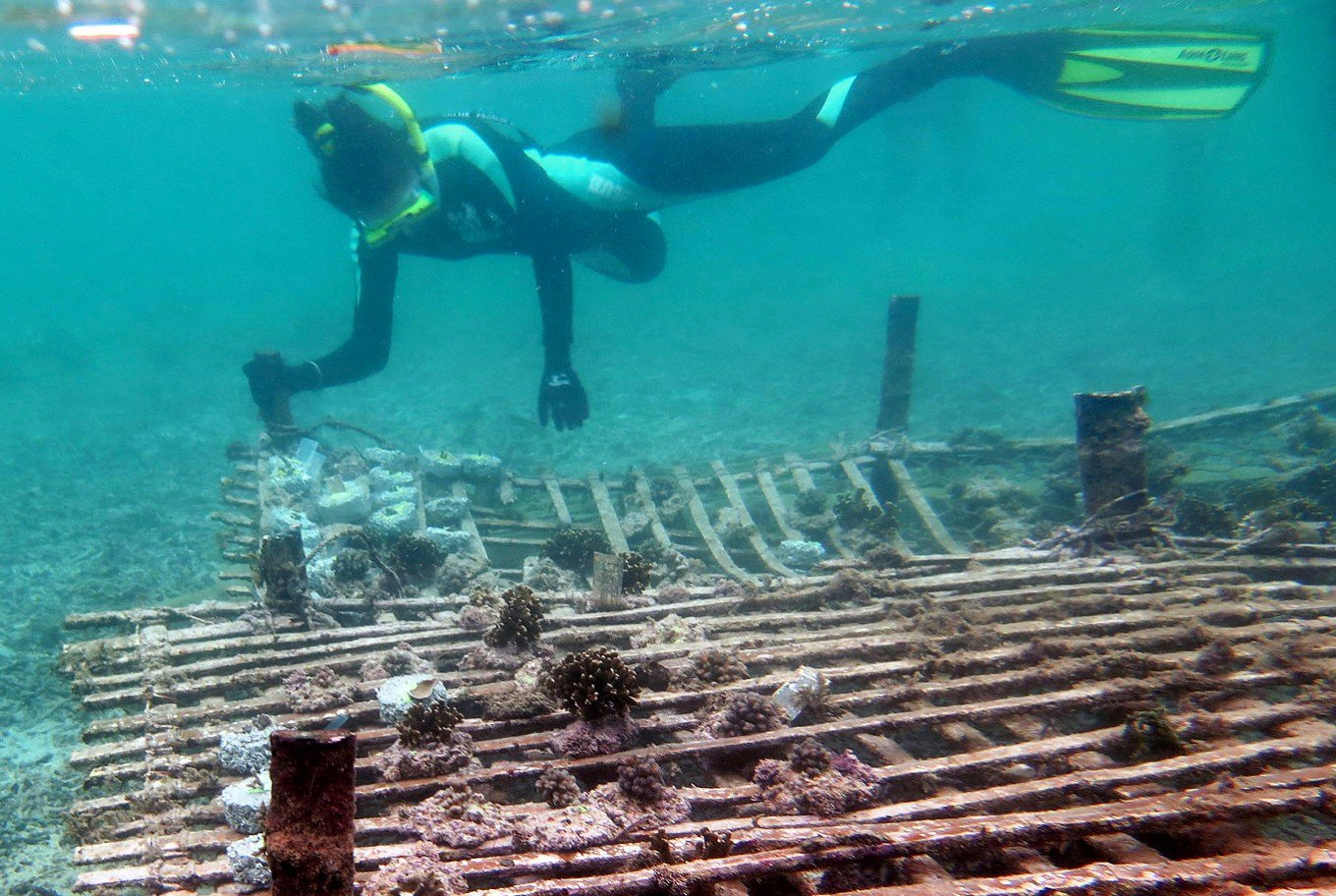 Bali Coral Reef Conservation Indonesia