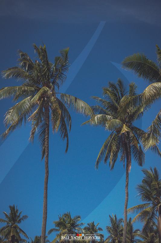 Awesome Palm Trees, Penida